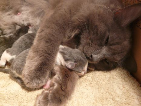 Mommy with Kittens 2 by Unseelie-Stock