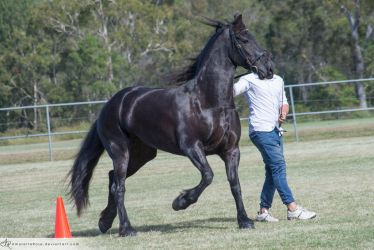QSEC Friesians #126 by AmoretteRose