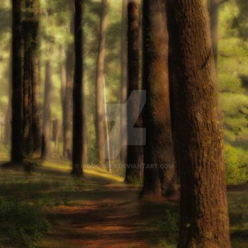 pathway by momoclax