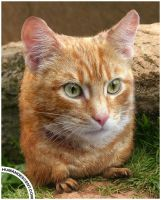 Prairie Cat by HumanDescent