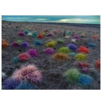 The Trouble with Tribbles by zasu
