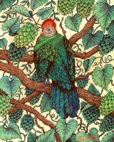 Tipsy Turaco by AngelaRizza
