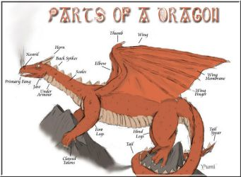 Dragon Parts by Cheyanne-Author