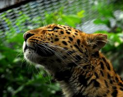 Sky Lit Leopard by Shadow-and-Flame-86
