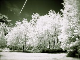 Infrared Forest Line by suricata5