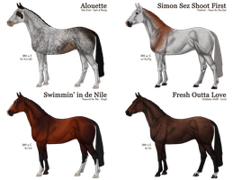 THOROUGHBRED Racing Age (1/4 OPEN) by Silent-Avarice