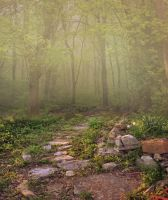 Premium Premade Background - Meadow Path by little-spacey