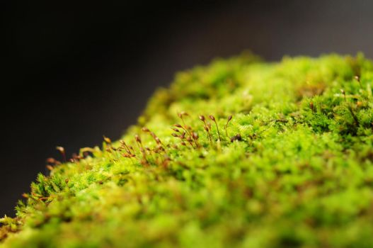Micro-Forest by Valdkynd