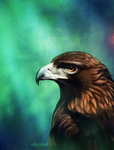 Eagle by syd-f