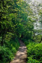 Into the Green Forest by Aenea-Jones