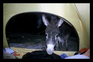 stalker donkey by chaos-kaizer