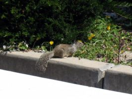 Wildlife at College by Sirevil