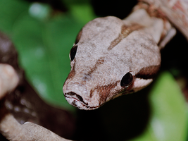 Boa Constrictor 7 by mr-tiefenrausch