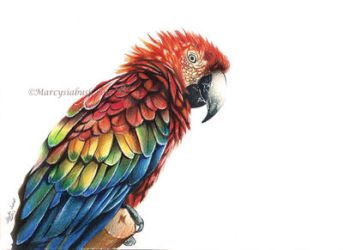 Parrot Magic by Marcysiabush