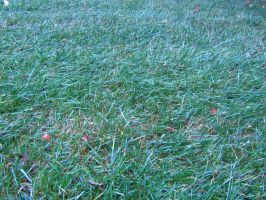 Stock Grass 2 by Camo-Stock