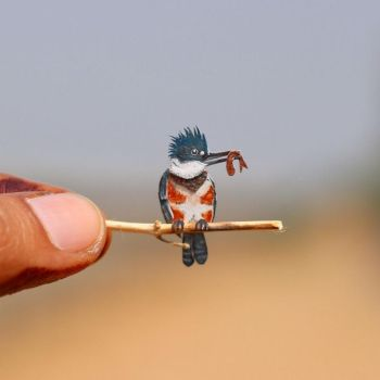 Belted Kingfisher - Paper cut birds by NVillustration