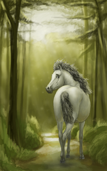 Do you have ever lost in woods? by C-Creatio