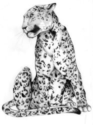 leopard by ShangaiLily