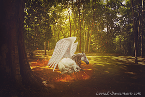 Horse Angel by LovizZ