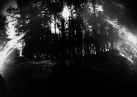 the black forest by LostOneself