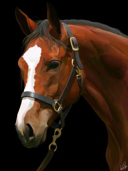 Horse Portrait by wolfnhorseluver101