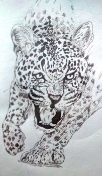IMG 20180522 leopard lunchtime sketch by seejay66