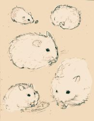Some Doodles of Hamsters by 0xo