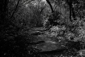 Wild Basin Trail 2 by PhillyPuddy