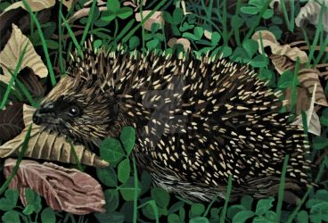 Hedgehog Amongst Dead Leaves And Clover by eastcorkpainter