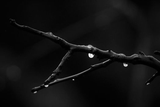 From Snow to Tears by Calidris555