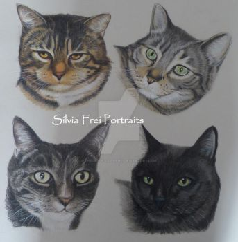 Commissioned pet portrait of four cute kitties by theArtofsilviafrei