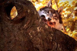 Outtakes: Sneaky Coyote by NaturePunk