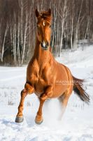 Golden on the white by Vikarus