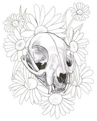 Cat Skull and Daisies