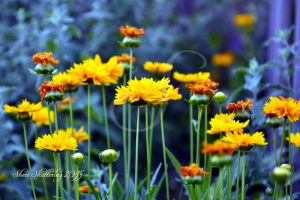 My Darling Daisies by Scooby777