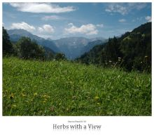 Herbs with a View by signmeupscotty