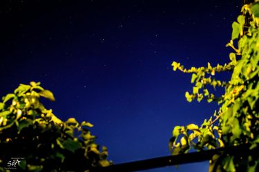 Der Blick in die Sterne - View to the stars by ScipiHamburg