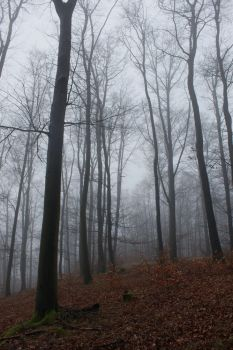 Foggy Forest 16 by sacral-stock