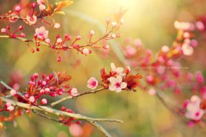 Spring by Lenna3
