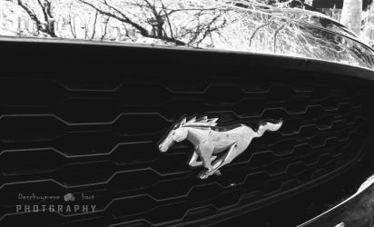 Mustang by ponyfleute