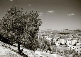 Olive Tree by Muhanned