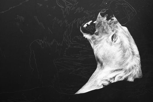 New scratchboard WIP by AllieRaines