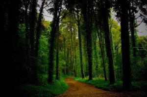 Woods1 by P3droD