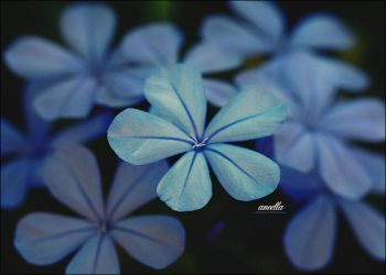 Blue by aneella