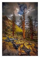 Sequoia Ridge II by EtherealSceneries
