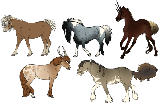 KoD | Adopts | Open by War-Colt