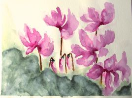cyclamen by minamiko