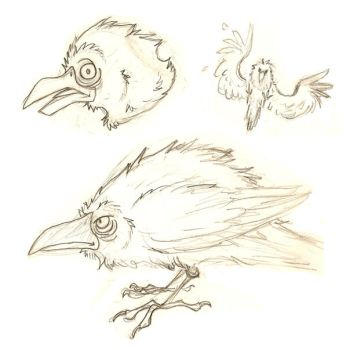 Crow Sketches by Kata