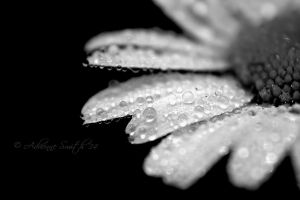 Droplets by Roses-to-Ashes