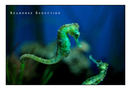 Seahorse Seduction by fangedfem